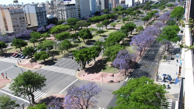 trees in buenos aires