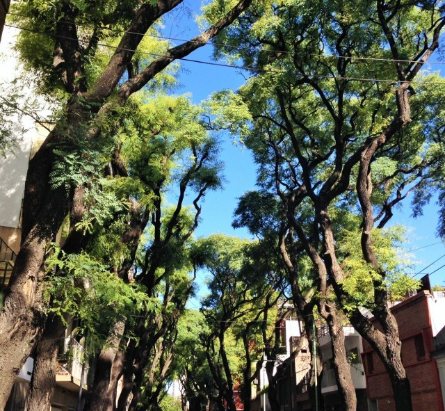 buenos aires trees