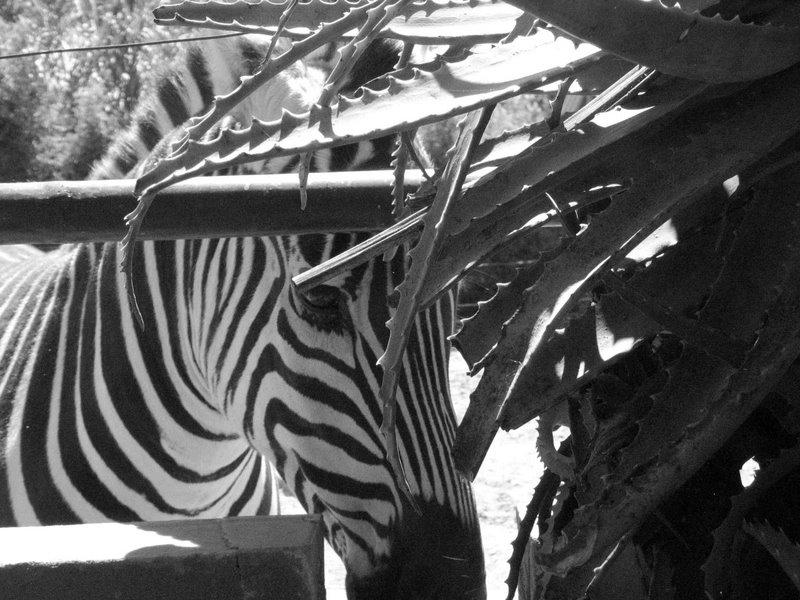Photo Essay A Trip To The Zoo Landingpadba