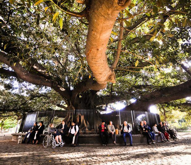 Buenos Aires Tree Guide Landingpadba